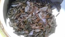 高知香ル茶20120330-3