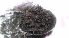大分杵築紅茶べにふうき20130414-1
