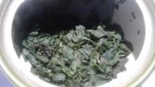 国産紅茶20130915秘密烏龍5