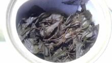 国産紅茶20130918 みやざき有機紅茶2013 -3