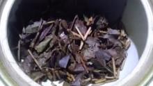 国産紅茶20130918秘密3