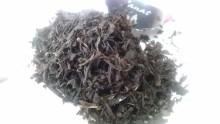 国産紅茶20131016きーむんてぃー1