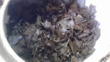 国産紅茶20131019みなまた紅茶自然3