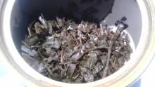 国産紅茶20131101みらい」FF3