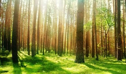 JPG-couv-arbres