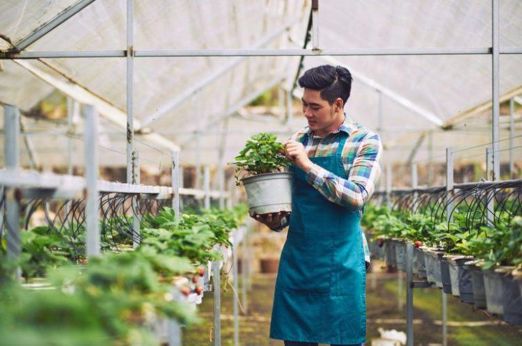 Pelajari bidang bisnis pertanian yang sesuai