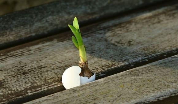 startup bisnis - tumbuh alami