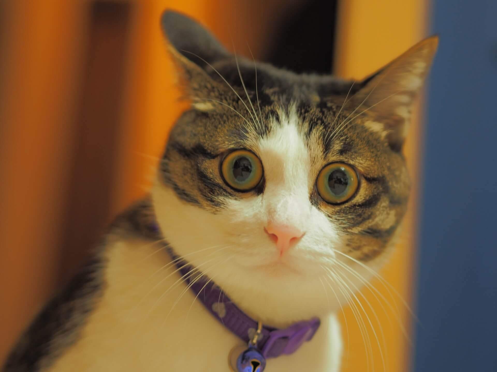 驚いてこちらをガン見する猫