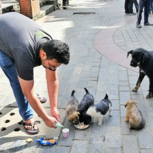 feeding stray puppies in Manali