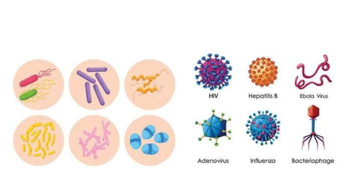 what is the difference between bacteria and virus