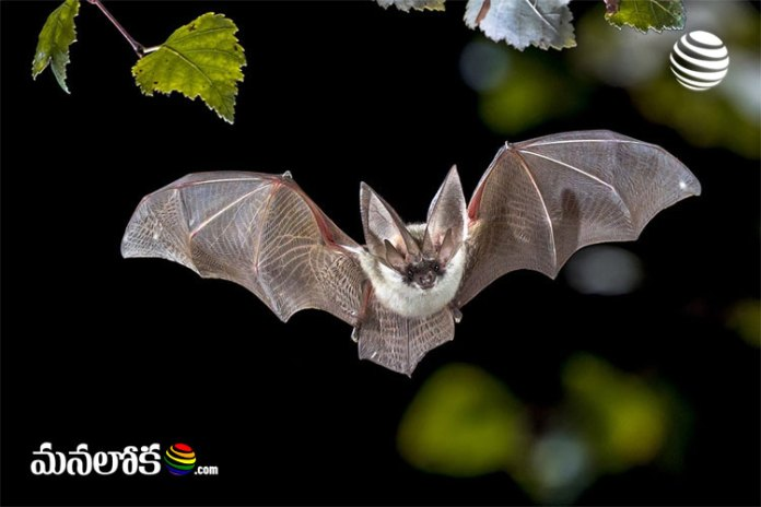 corona virus living in bats from decades