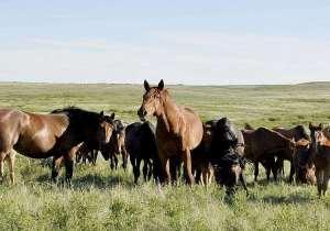 Ветеринары выявили ренопневмонию у лошадей