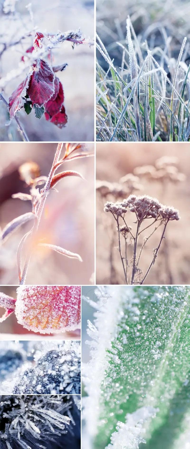 Inspirations : photographies de nature givrée