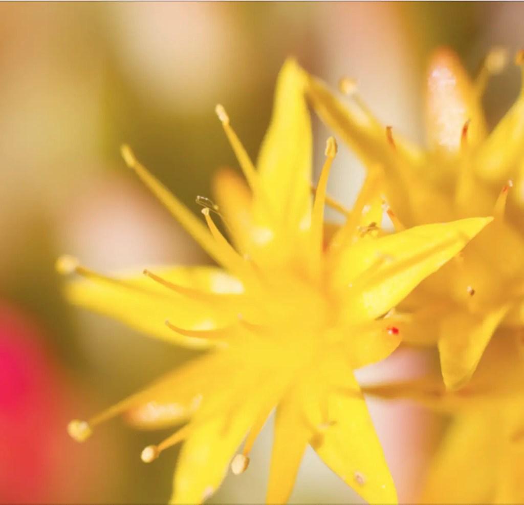 Inspirations #4 : Fleurs Jaunes & Roses