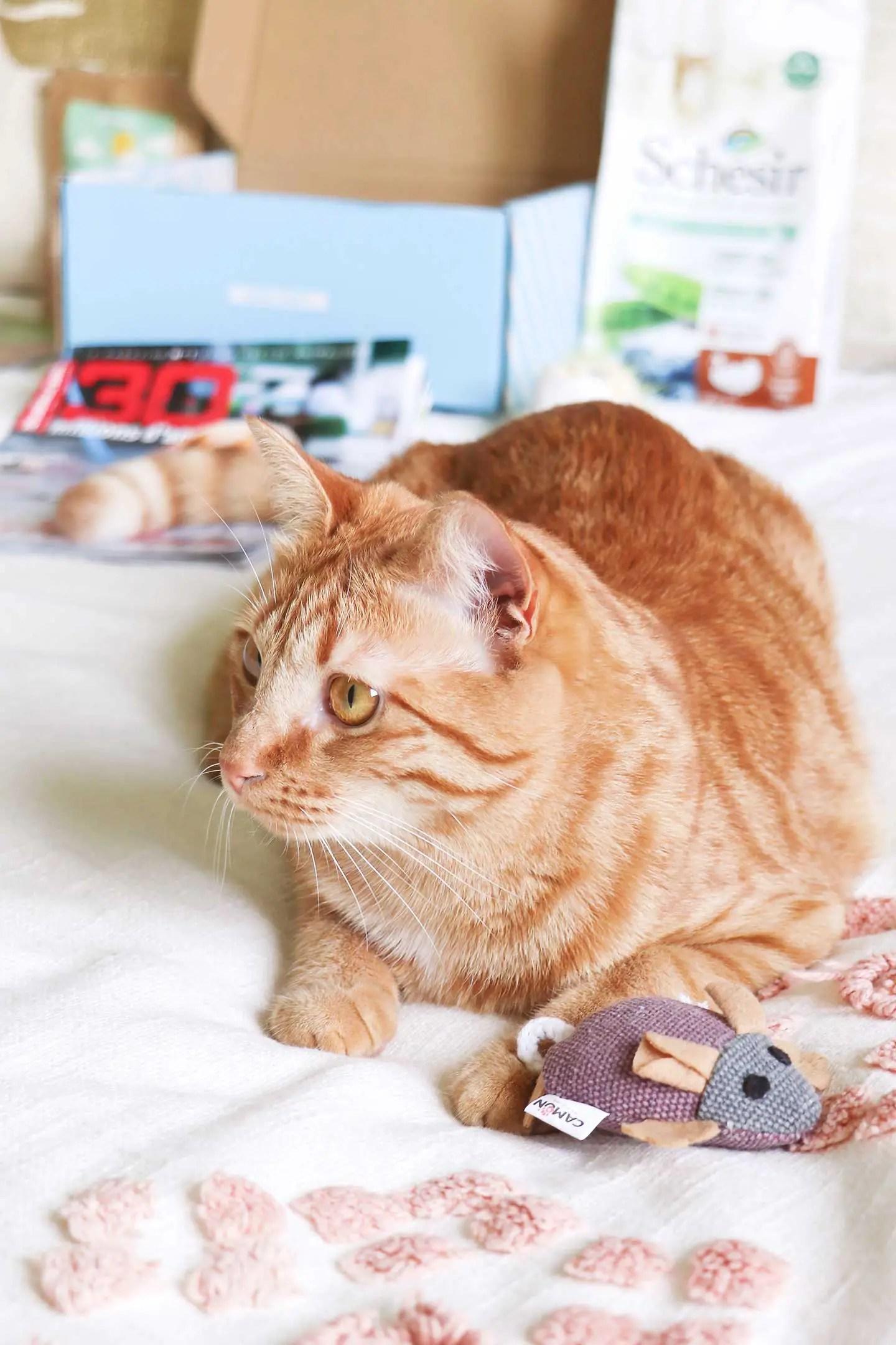 Box pour chats