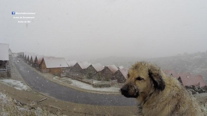 cão serra estrela neve chalets