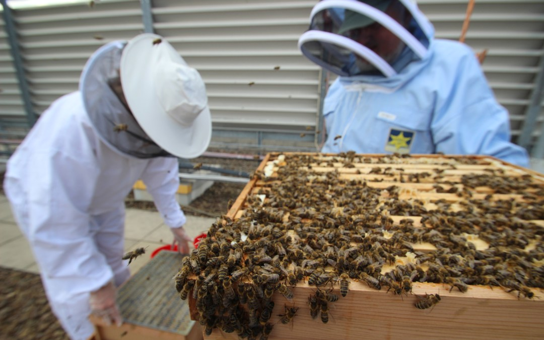 City Centre Beehives – The Printworks