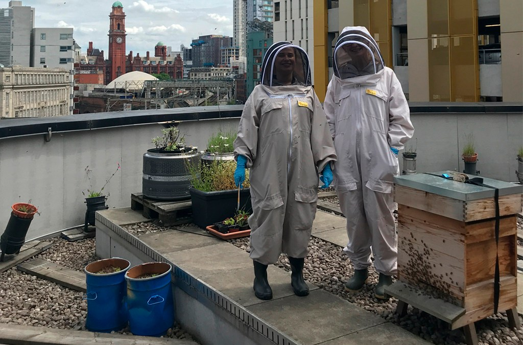 City Centre Beehives – Home