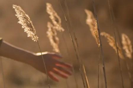 Hand in field of corn