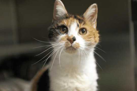 Gladys: Waiting for you at Manchester Animal Shelter.