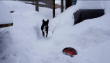 """""""Neither wind nor 7 ft. of snow will reduce my affection for Frisbee."""" - Ollie Turnbull"""