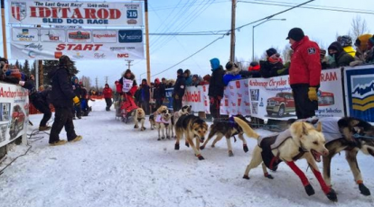 Aliy Zirkle and her team are off at the start of Iditarod 2015.
