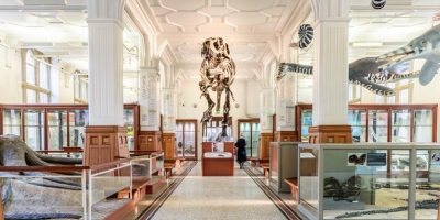 Manchester Museum T-Rex - Image courtesy of Marketing Manchester.