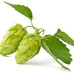 Image of Hoppy Beer Tasting Event