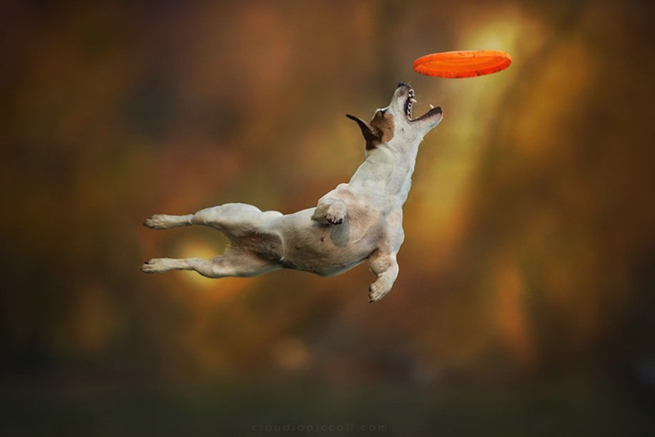 """Dogs can Fly"" – Unbelievable Mid-Air Action Shots of Dogs by Claudio Piccoli"