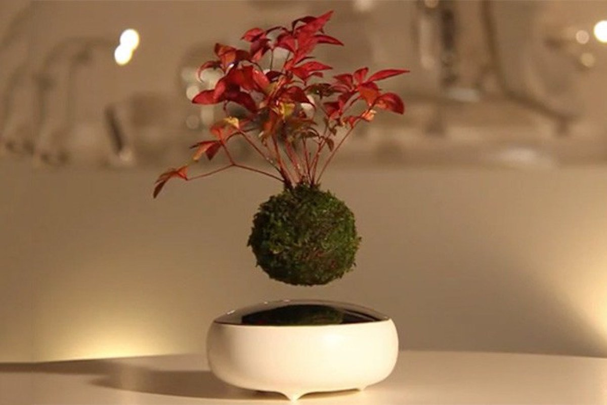 Air Bonsai Schwebender Bonsai Baum Wohnzimmer Topf