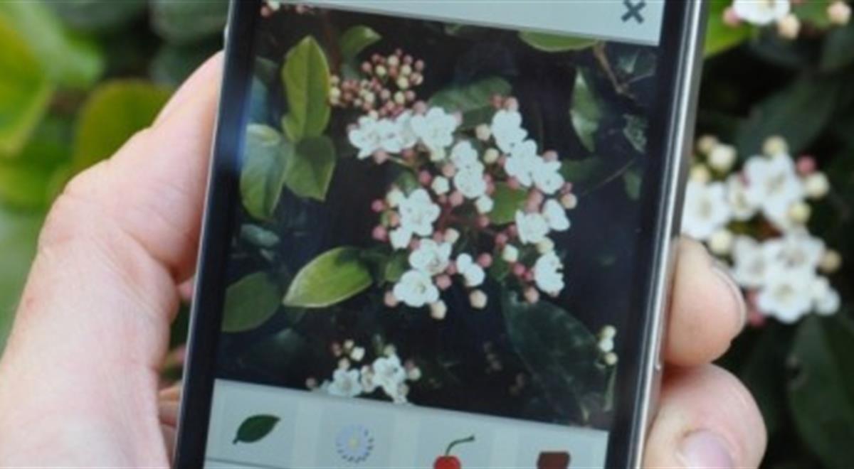 PlantNet Smartphone App Pflanzen Bäume Enzyklopädie Wissen Informationen taggen