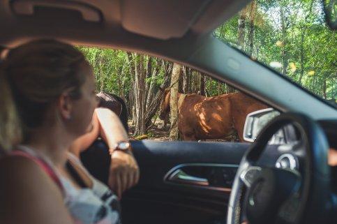 Mercedes-Benz GLA200 mit Frau am Steuer neben Pferd