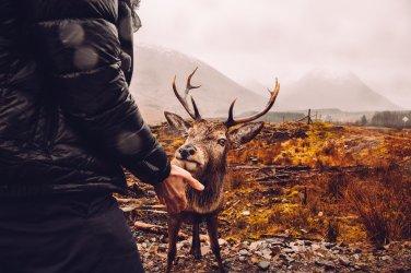 Reh Geweih Berge Schottland Landschaft