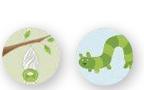 CocoonsCaterpillar