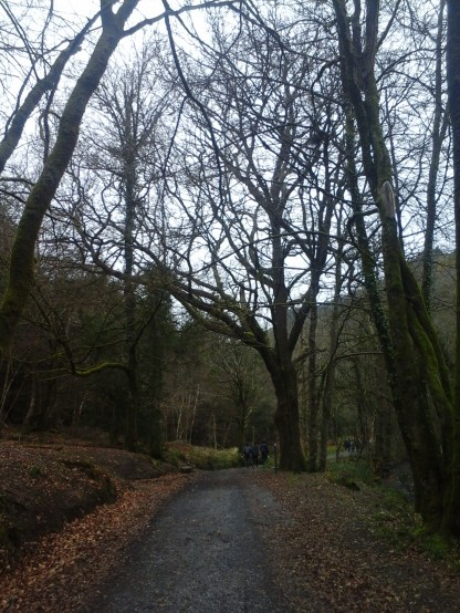 More trees than we sometimes walk through