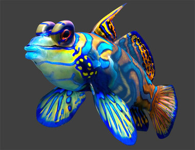Interesting Facts Mandarin Fish