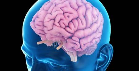 Scientists reverse memory decline using electrical pulses The Mandatory Training Group UK -