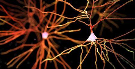 New type of dementia identified 1 - The Mandatory Training Group UK -