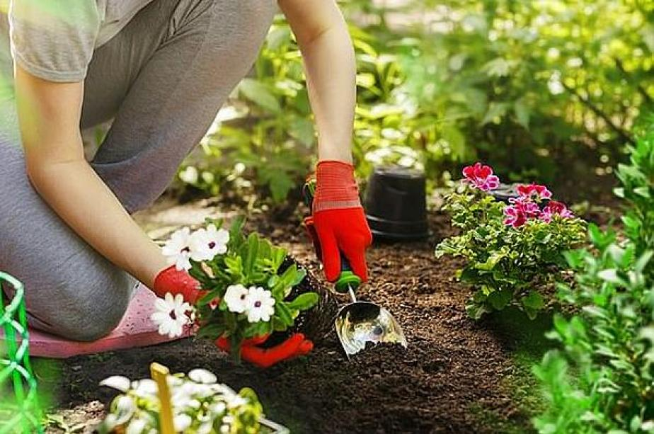 Why gardening gloves can help weed out sepsis - MTG UK