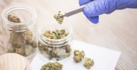 Cannabis-based drugs to help epilepsy and MS approved for NHS use - The Mandatory Training Group UK -