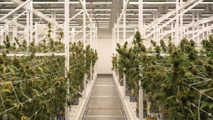 LEDs are spearheading the next wave of innovation in medicinal cannabis - MTG UK