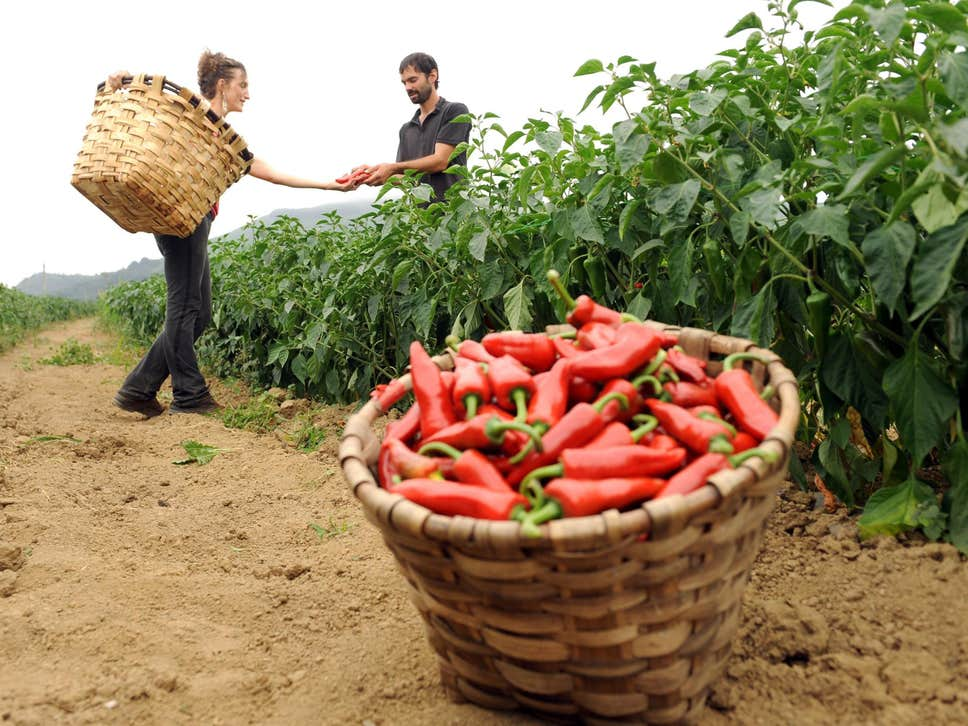 Chilli eaters have fewer deadly heart attacks, say scientists - The Mandatory Training Group UK -