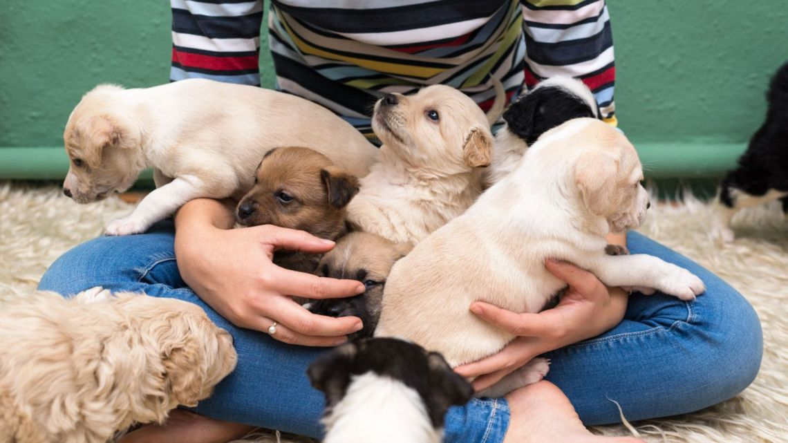 Pet shop puppies linked to spate of illnesses across US - The Mandatory Training Group UK -