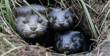 Freight drivers added to rules on Denmark travel due to mink COVID concerns - The Mandatory Training Group UK -