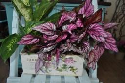 Jardin tin pot - Two house plants
