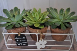 Mother's Day Succulent Planter