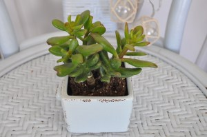 Lovely Succulent Planter