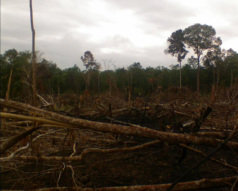 penggundulan-hutan