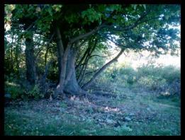 same_tree_different_path_