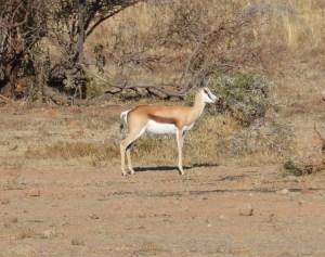 Pilanesberg - Juillet 2015